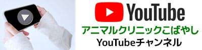 アニマルクリニックこばやしのYoutubeチャンネル