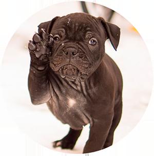 子犬イメージ